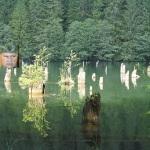"""In atentia SRI: Verosul Verestoy Attila vrea sa puna mana pe Lacul Rosu pentru """"Tinutul Secuiesc"""", profitand de vacanta parlamentara"""