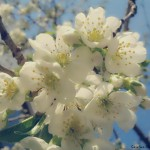 La Multi Ani Florilor Romaniei! Revista Familia Ortodoxa: 100 de ani de la nasterea Duhovnicului Moldovei, Parintele Cleopa