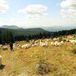 Gata! Vacanta in Romania: Bucovino, plai cu dor. Schitul 12 Apostoli: o gura de Rai din Muntii Calimani. FOTO/VIDEO Frumusetile Romaniei, Gradina Maicii Domnului